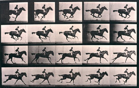 """Annie G"" Galloping, Animal Locomotion by Eadweard Muybridge 1884-6, Collotype. Courtesy of Williams College Museum of Art, Williamstown, Mass."