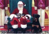 Koko-and-Ginger-Meet-Santa