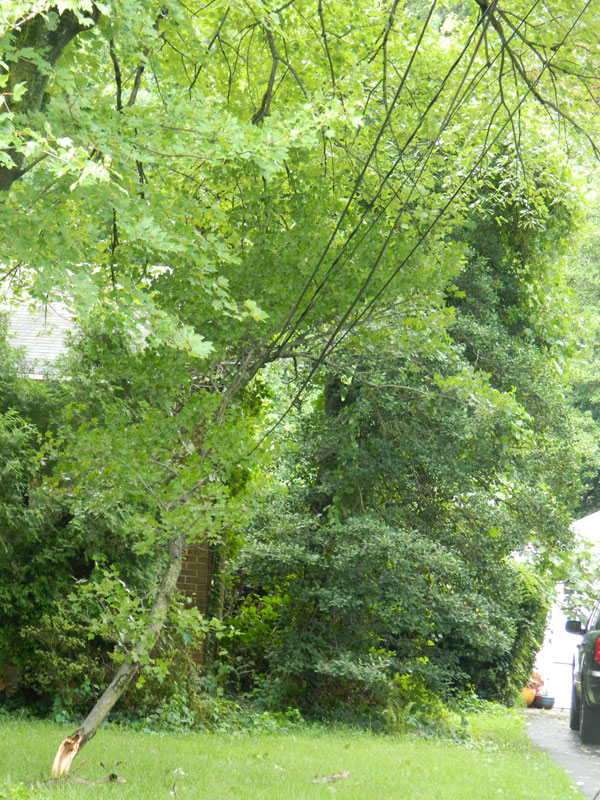 treeonpowerlines