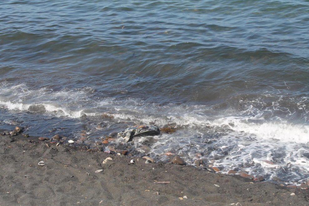 turtle mortality santa rosalia
