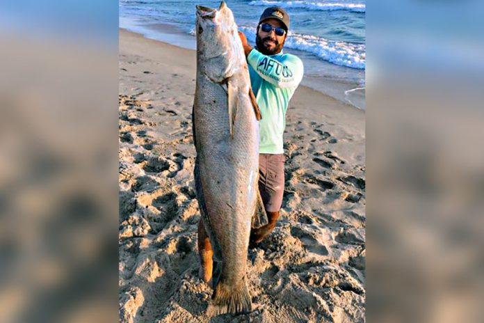 Hombre de La Paz capturó lobina de mar de 39 kilos y bate récord ...
