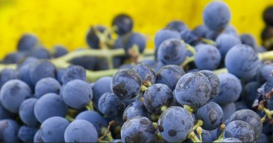 grapes-mmm.jpg