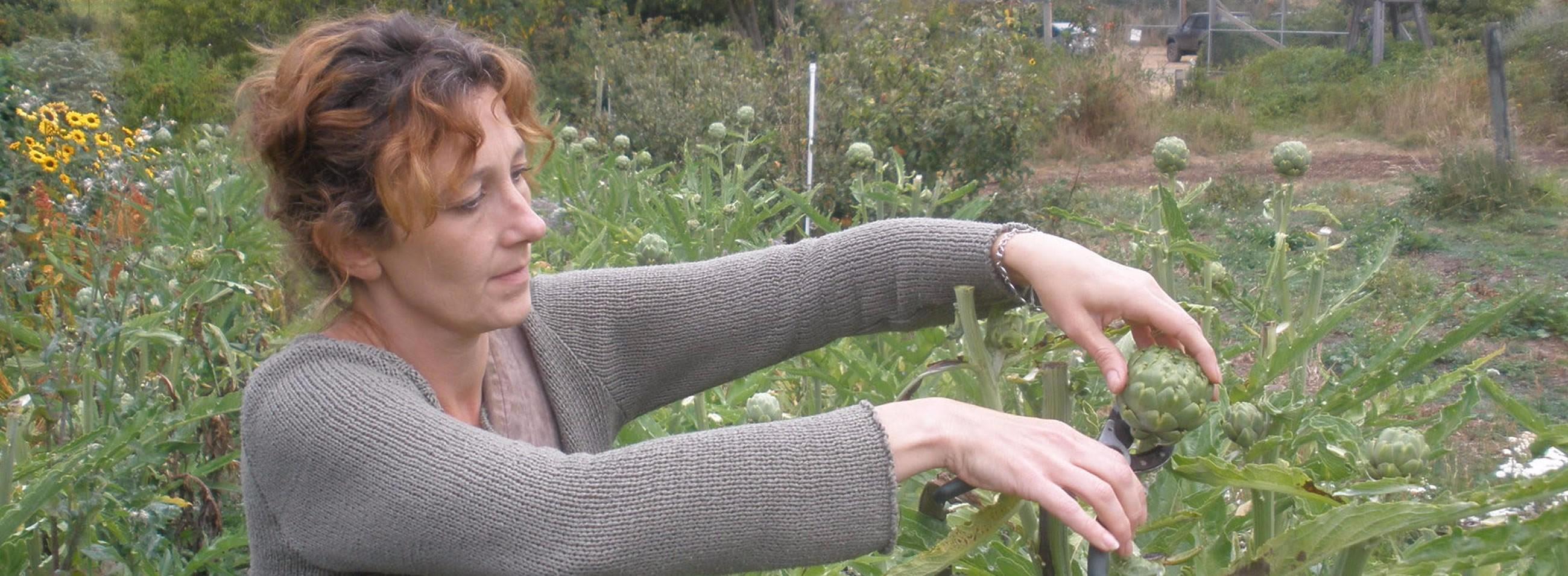 artichokes fp