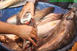 Fomaline poison in fish picture no-01.