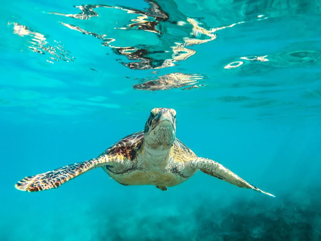 Wohin kann man derzeit reisen, Corona Urlaub, Barbados, reiseziele, reise