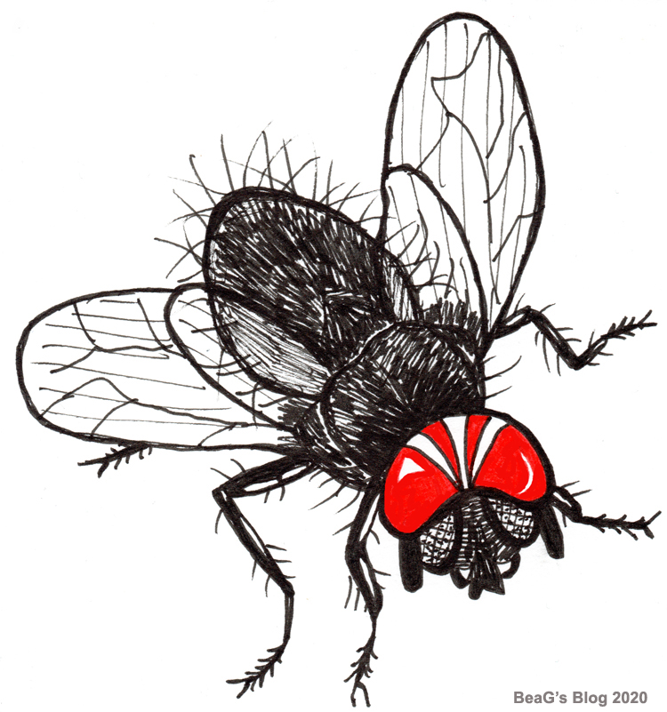 Hand drawing of black house fly with red and white helmet.