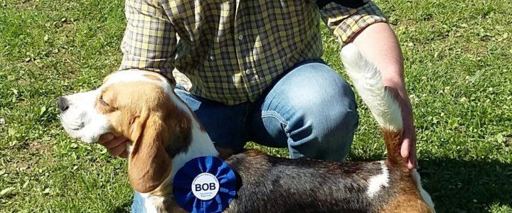 I nostri Beagle