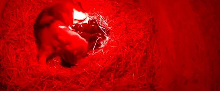Cucciolata nata il 24/03/2021 Chocolate coverd cherry shot X Speranza