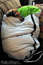 Luna watches TV in her Alcott Sleeping Bag