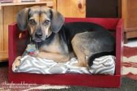 Sneak peek into a new dog bed DIY. Bed from AllPetNaturals.