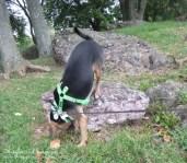 Luna climbs around at Ida Lee Park - Hiking in Northern Virginia