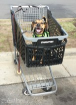 Dogs with carts!