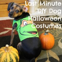 Last Minute DIY Dog Halloween Costumes from Baby Onesies