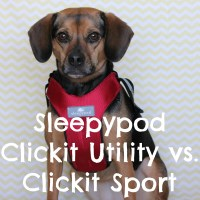 How do Sleepypod's Clickit Sport and Clickit Utility Dog Harnesses Compare?