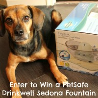 Enter to Win a PetSafe Drinkwell Sedona Fountain
