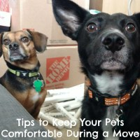 Tips and Best Practices to Keep Your Pets Comfortable During a Move