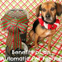Benefits of an Automatic Pet Feeder {Stocking Stuffer Giveaway – Day #7}
