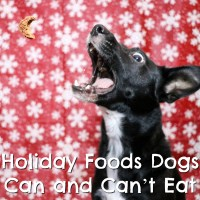 Holiday Foods Dogs Can and Can't Eat {Stocking Stuffer Giveaway – Day #6}