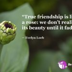 Top 100 Friendship Quotes True Friends Quotes To Share