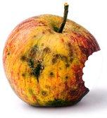 Rotten Apple with bite mark