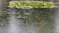 Reynolds, rain, waves, pond, raining