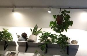 plants, Jacob the Angel, Coffee Covent Garden