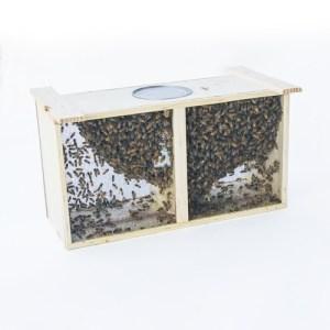 Bee Packages & Queens