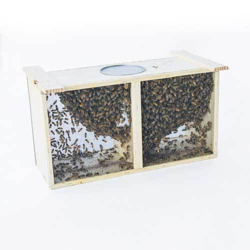 3 lb. Carniolan Honey Bee Package