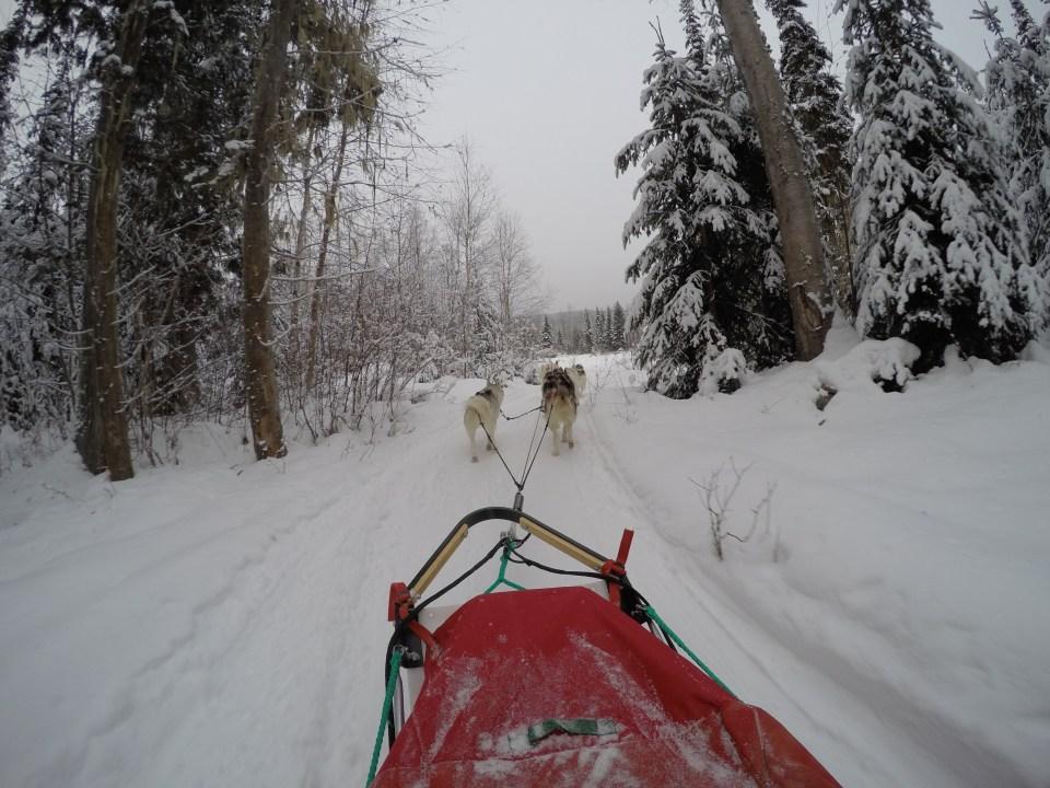 Fifteen Top Winter Activities in Alberta, Yogo, Golden, Winter, Golden Dog Sled Adventure's, Canada