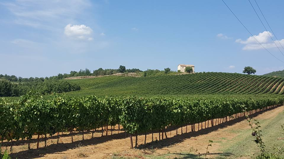 The Best of Central Italy Wine Region, Scansano, Magliano, Sunflowers, Wine Tasting, Italy
