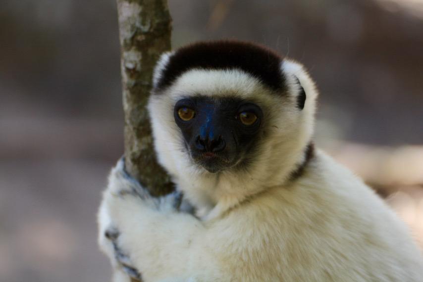 Lemur, Madagascar, Rainforest, Hiking