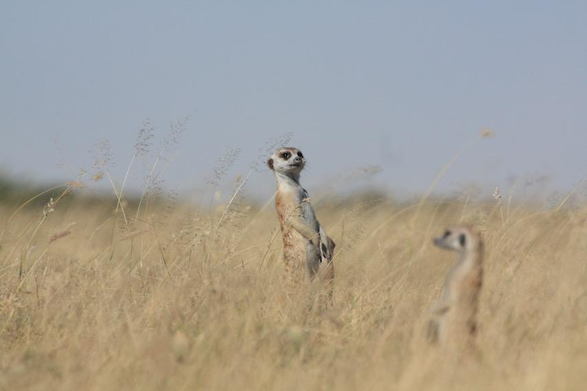Meerkat and Salt Pan Tour, Makgadikgadi Pan, Nwetwe Pan, Nxai Pan, Sua Pan, Meerkats, Salt Flats, Botswana