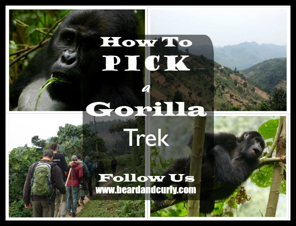 How to Pick a Gorilla Trek in Africa