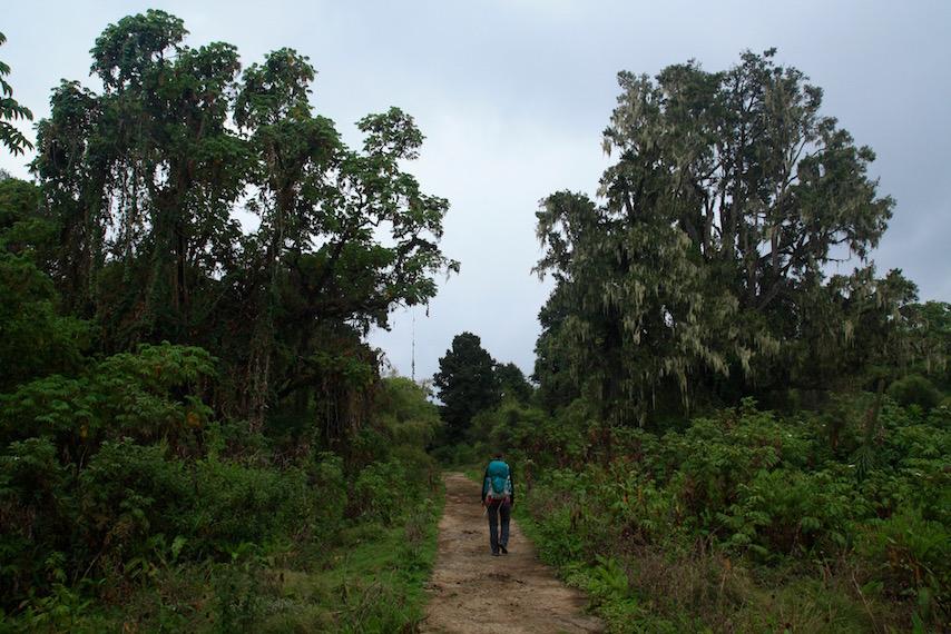 Mount Kenya National Park, Batian, Lenana, Hiking, Trekking, Circuit Summit, Naro Moru, Nanyuki, Sirimon, Kenya