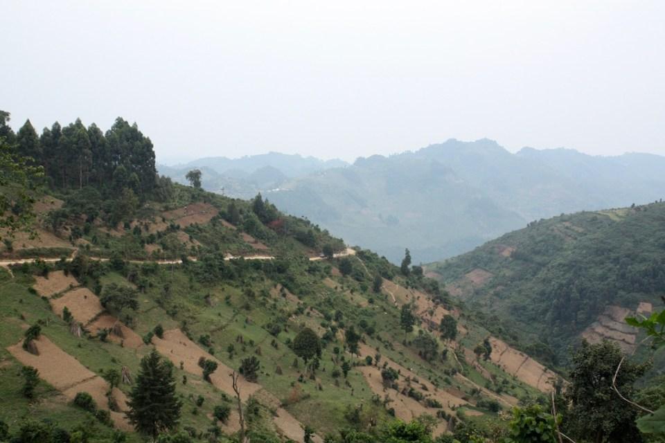 How to Pick a Gorilla Trek in Africa, Mountain Gorilla's, Mgahinga Gorilla Park, Bwindi, Virunga, Volcano's, Trek, Hike, Uganda, Rwanda, Congo, Democratic Republic of Congo