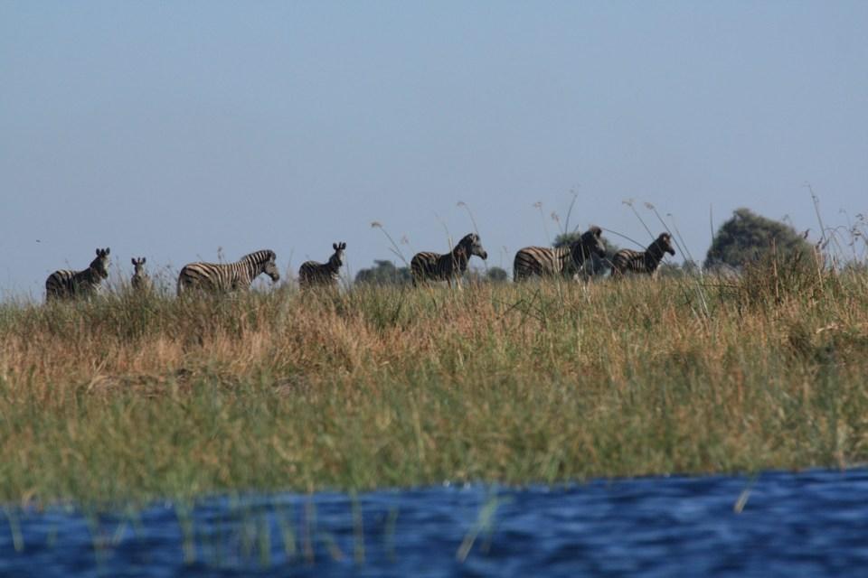 Mokoro Boat Ride Experience, Botswana, Safari, Zebra, Elephant, Leopard, Moremi, Chobe, Okavango Delta, Moan, Kasane