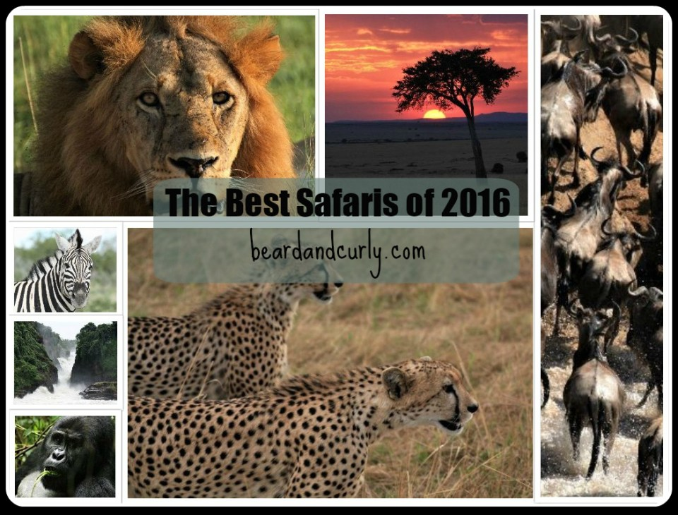 The Best Safaris of 2016 in Africa
