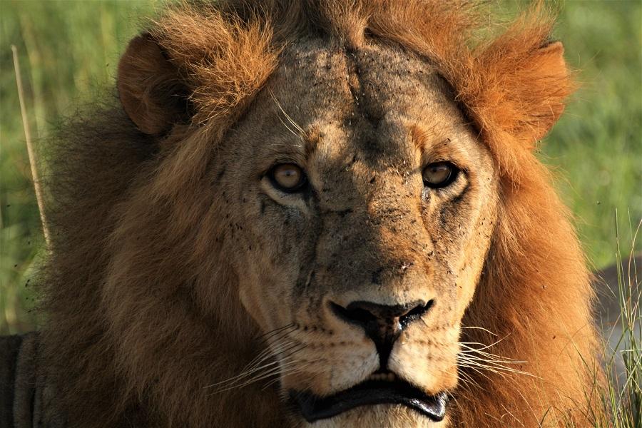 Okavango Delta Safari, Botswana, Safari, Zebra, Elephant, Leopard, Moremi, Chobe, Okavango Delta, Moan, Kasane