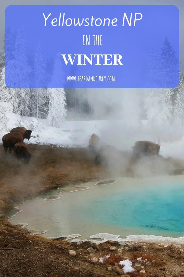Yellowstone in the Winter, Snowmobile, Snowcoach, Tours, Ski, Snowshoe, Montana, Wyoming #yellowstone #winter #snowmobile www.beardandcurly.com
