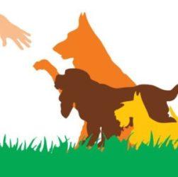 cropped-pawsimage-logo.jpg