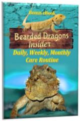 Beardie Care Routine