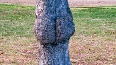 Ett arsle med träsmak
