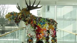 174114-moose-IMG_3768