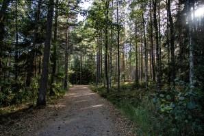180810-181052-skog-1D8A7995