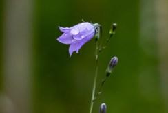 190707-153713-utflykt-persberg-blomma-1D8A7274