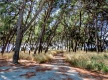 190827-110933-skog-IMG_1546