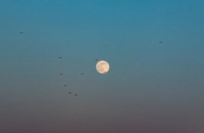 200407-184358-birds-moon-1D8A2957