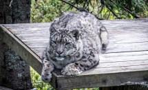 200723-155517-orsa-cat-1D8A7894