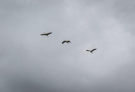 200830-124118-birds-1D8A4209