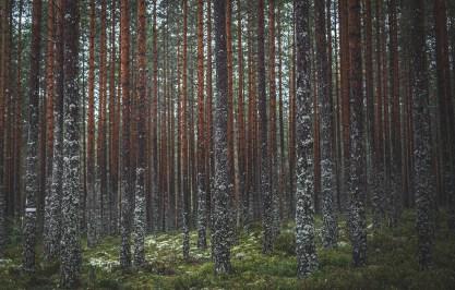 200830-164815-tree-1D8A4440